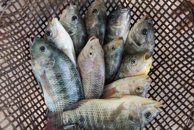 L'Africa si concentra su acquacoltura e mangimistica per diminuire l'import di cibo