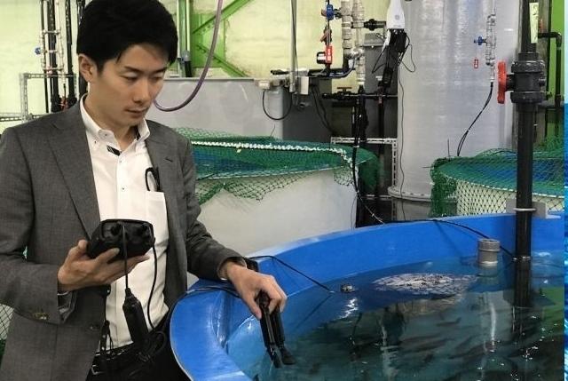 Salmone. FRD Japan ha sviluppato un sistema di allevamento che utilizza acqua di mare artificiale