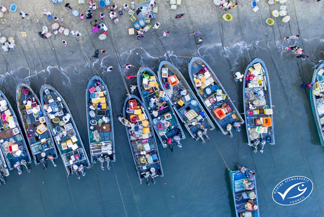 MSC Pesca sostenibile