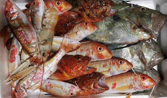 Pesce fresco di stagione